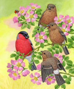 Brown Birds And Bullfinch paint by numbers