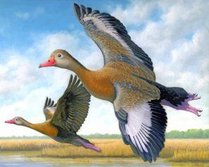 Ducks In Flight Paint by numbers