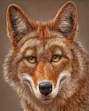 Happy Coyote Paint by numbers