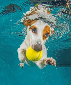 Jack Russell Underwater Paiint by numbers