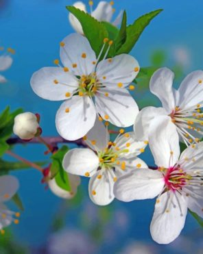 white-flowers-paint-by-numbers