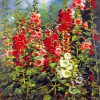 Blossom Flowers Garden Paint by numbers