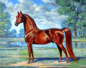 Brown Horse Paint by numbers