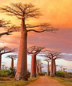 Avenue Of The Baobabs paint by numbers