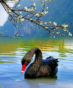 black-swan-bird-paint-by-number