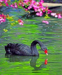 black-swan-paint-by-numbers