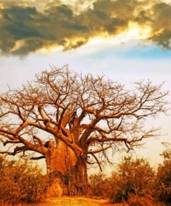 Oldest Baobab Tree Paint by numbers
