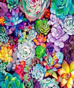 Succulents Plants paint by numbers