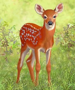 White Tailed Deer paint by numbers