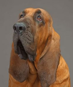 Bloodhound-paint-by-number