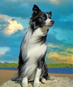 aesthetic-border-collie-dog-paint-by-number