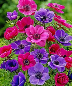colroful-anemone-paint-by-number