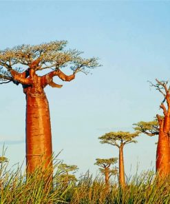 Alley Of The Baobabs Madagascar Paint by numbers