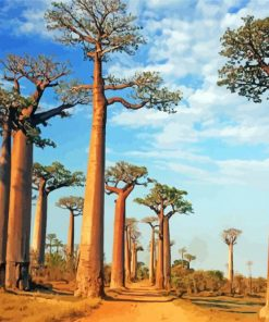 Alley Of The Baobabs Paint by numbers