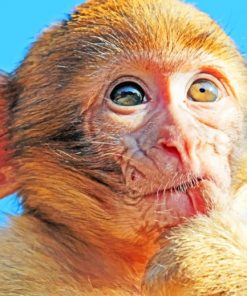 Brown-Macaque-Monkey-paint-by-numbers