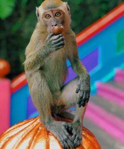 Brown-Monkey-On-Orange-Pumpking-paint-by-number