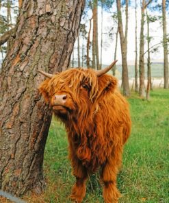 Cute-Brown-Highland-Cow-paint-by-number