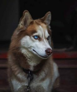 Husky-Wild-paint-by-number