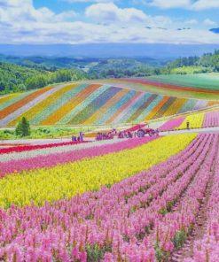 Japan-Shikisai-No-Oka-paint-by-number