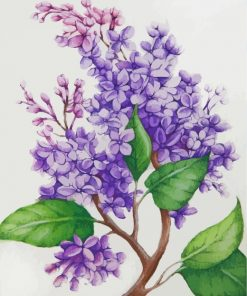 Lilac Flowers Paint by numbers