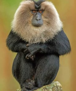 Lion-tailed-macaque-paint-by-numbers