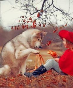 MOH_Husky-Little-girls-Red-Riding-510x407-1