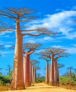 Madagascar Baobabs Trees Paint by numbers