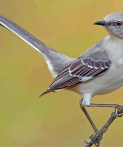 Mockingbird Bird Paint by numbers