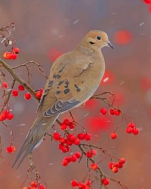 Mourning Dove Paint by numbers
