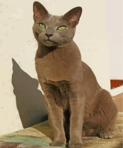 Russian Blue Cat Paint by numbers