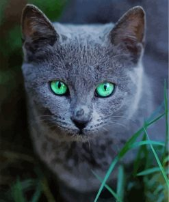 Russian Blue cat pet Paint by numbers