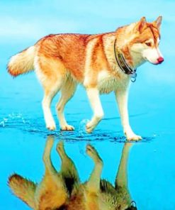 Siberian-Brown-Husky-paint-by-numbers-510x639-1