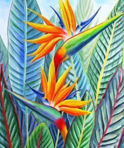 Strelitzia Bird Of Paradise Paint by numbers