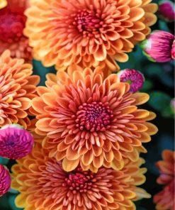 aesthetic-chrysanthemum-paint-by-numbers