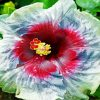 Aesthetic Hibiscus Flower Paint by numbers