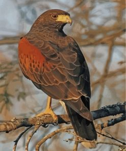 aesthetiic-hawk-eagle-paint-by-numbers