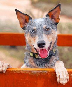 australian-heeler-cattle-dog-mix-paint-by-number