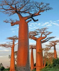 Baobab Trees Paint by numbers
