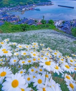 Beautiful Daisy Field Paint by numbers