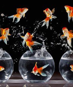 Beautiful Dancing Goldfishes