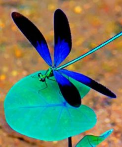 black-and-blue-dragonfly-paint-by-numbers