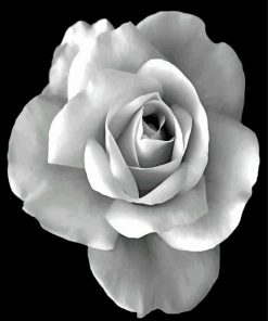 blakc-and-white-rose-paint-by-numbers