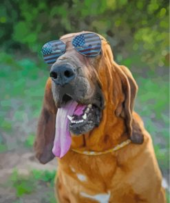 Bloodhound With Sunglasses Paint by numbers