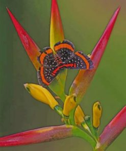 Butterfly And Bird Of Paradise Flower Paint by numbers