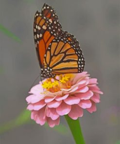 butterfly-paint-by-numbers