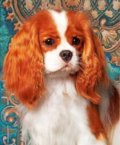 cavalier-king-charles-spaniel-paint-by-number