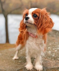 cavalier-puppy-animal-paint-by-numbers