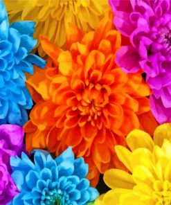 colorful-chrysanthemum-paint-by-numbers