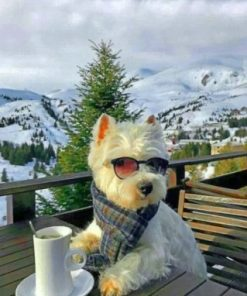 Cool Westie Paint by numbers