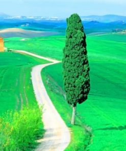 Country Road Tuscany Italy Paint by numbers